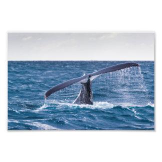 Humpback Whale - Tail Fluke Photo Print