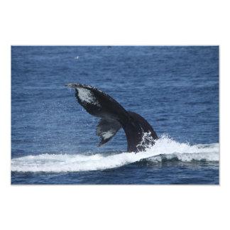 humpback whale tail flukes print photograph