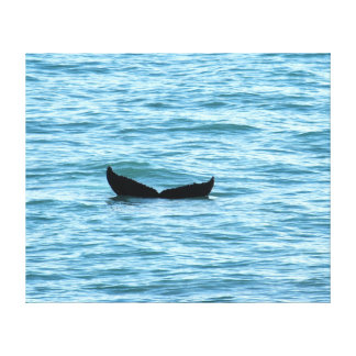 HUMPBACK WHALE TAIL MACKAY QUEENSLAND AUSTRALIA CANVAS PRINT