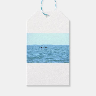 HUMPBACK WHALE TAIL MACKAY QUEENSLAND AUSTRALIA GIFT TAGS