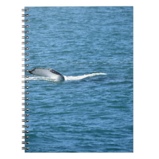 HUMPBACK WHALE TAIL MACKAY QUEENSLAND AUSTRALIA NOTEBOOK