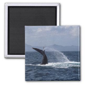 Humpback Whale Tail Splash Magnet