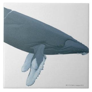 Humpback Whale Tile