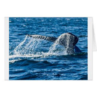 Humpback Whale Washington State Card