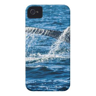 Humpback Whale Washington State iPhone 4 Cases