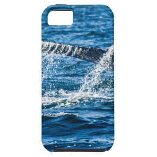 Humpback Whale Washington State iPhone 5 Cases