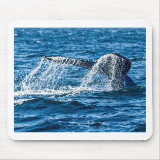 Humpback Whale Washington State Mouse Pad