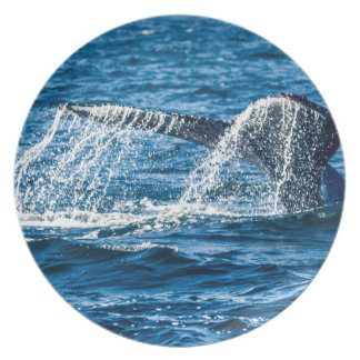Humpback Whale Washington State Plate