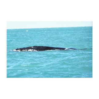 HUMPBACK WHALE WHITSUNDAY'S QUEENSLAND AUSTRALIA CANVAS PRINT