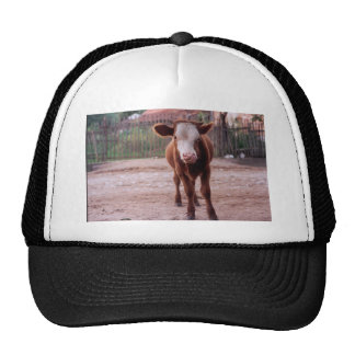 hungry cow trucker hat