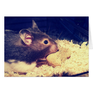Hungry Hamster Card