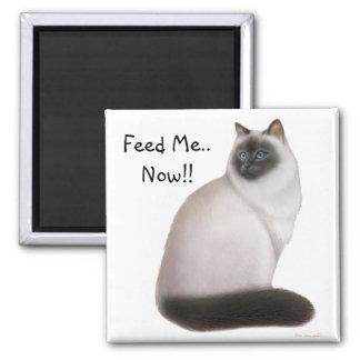 Hungry Himalayan Cat Magnet