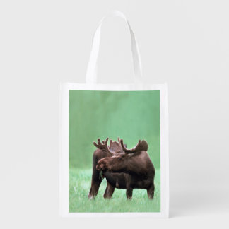 Hungry Moose with Velvet Antlers at Yellowstone Reusable Grocery Bag
