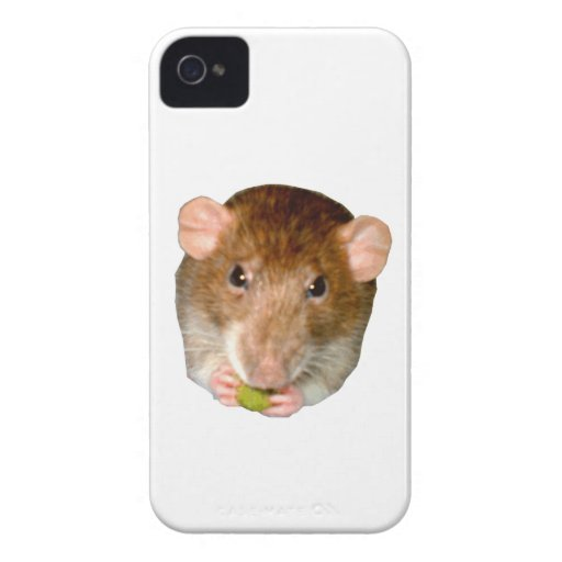 Hungry Rat Blackberry Bold Case iPhone 4 Cases
