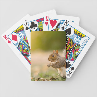 Hungry Squirrel Bicycle Playing Cards
