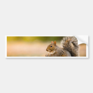 Hungry Squirrel Bumper Sticker