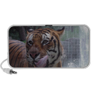 Hungry tiger speaker system