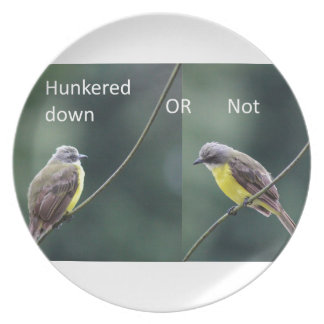 hunkered down or not bird plate