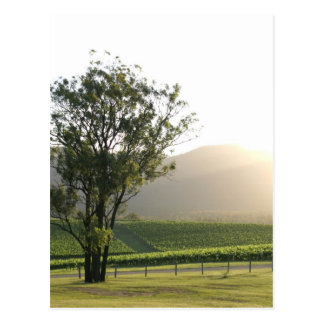 Hunter Valley, New South Wales Postcard