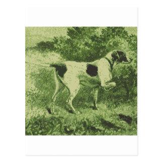 Hunting Dog Postcard