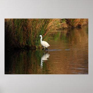 Hunting Egret Print