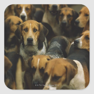 Hunting foxhounds, Galway Blazers, Ireland Square Sticker