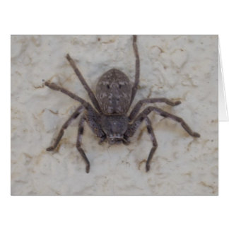 Huntsman_Spider,_Big_Greeting_Card. Big Greeting Card