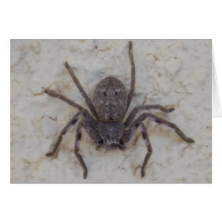 Huntsman_Spider,_Greeting_Card. Greeting Card