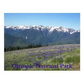 Hurricane Ridge, Olympic National Park Travel Postcard