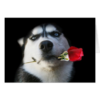 Husky and Rose Valentine/Tango Dog Card
