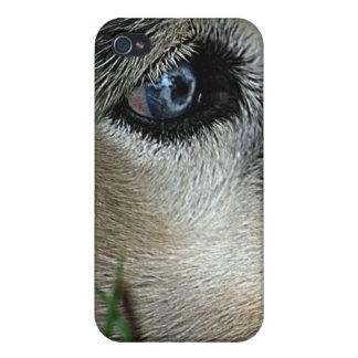 Husky Blue Eyes Siberia iPhone 4 Case