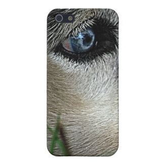 Husky Blue Eyes Siberia iPhone 5/5S Cases