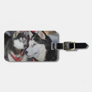 Husky dog before a race, Canada Luggage Tag