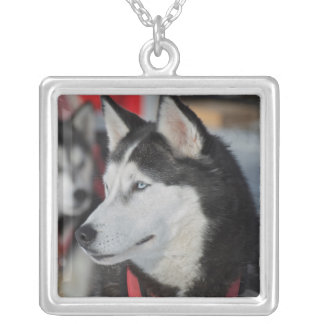 Husky dog before a race, Canada Silver Plated Necklace
