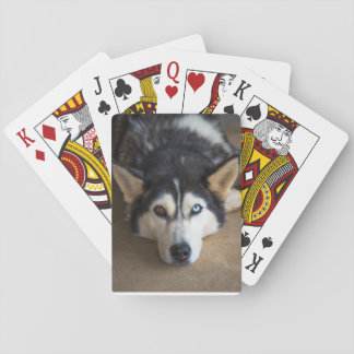 Husky Dog Playing Cards