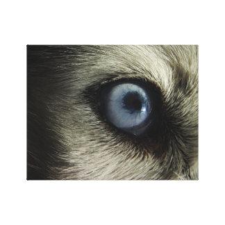 Husky Eye | Photo Design Canvas Print