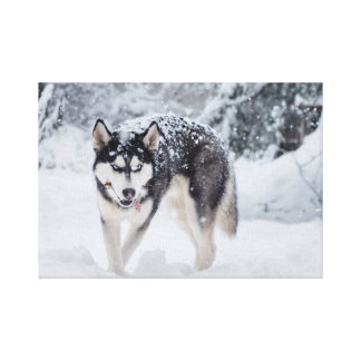 Husky in the snow canvas print