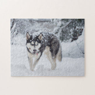 Husky in the snow jigsaw puzzle