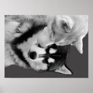 Husky Love Plakatdrucke