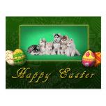 Husky puppies Easter