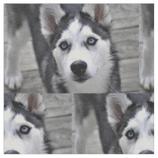 Husky Puppy Fabric