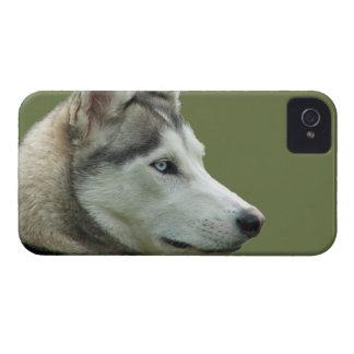 Husky Siberian dog photo blackberry bold case