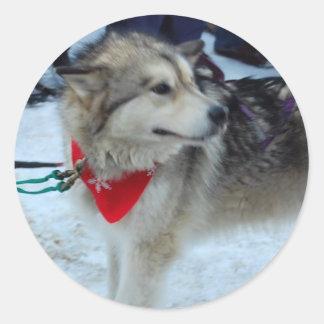 Husky Sled Dog Round Sticker