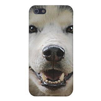 Husky Smile with Glowing Eyes Cover For iPhone 5/5S