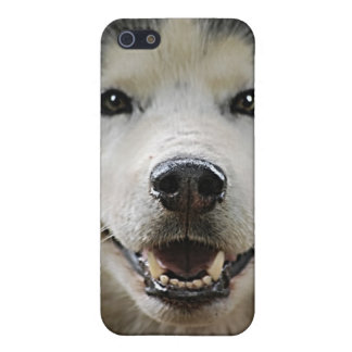 Husky Smile with Glowing Eyes iPhone 5 Covers
