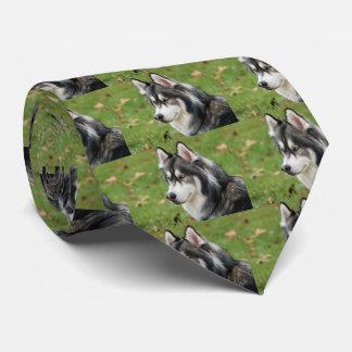 Husky Tie