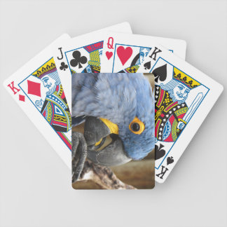 Hyacinth Macaw Parrot Bicycle Playing Cards