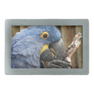 Hyacinth Macaw Parrot Rectangular Belt Buckle