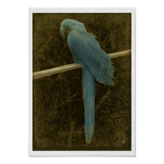 Hyacinth Macaw (Vintage Style) Poster