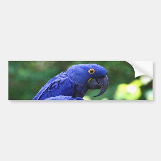 Hyacinth Macaws Bumper Sticker